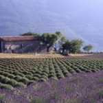 champs_campagne_provence.jpg